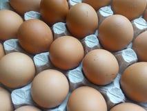 Uova beige in un vassoio del cartone Fotografia Stock Libera da Diritti
