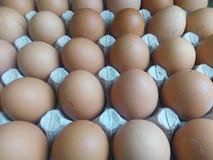 Uova beige in un vassoio del cartone Immagini Stock Libere da Diritti