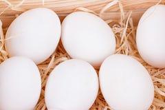 Uova bianche del pollo Fotografie Stock