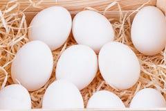 Uova bianche del pollo Fotografia Stock Libera da Diritti