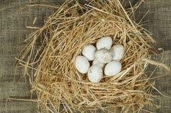 Uova bianche domestiche organiche nel nido della paglia Fotografia Stock