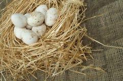Uova bianche domestiche organiche nel nido della paglia Fotografie Stock