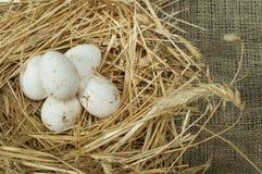 Uova bianche domestiche organiche nel nido della paglia Immagini Stock Libere da Diritti