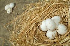 Uova bianche domestiche organiche nel nido della paglia Immagine Stock