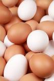 Uova bianche e marroni Fotografia Stock Libera da Diritti