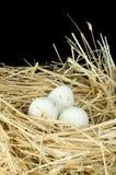 Uova bianche nazionali organiche nel nido della paglia Fotografia Stock