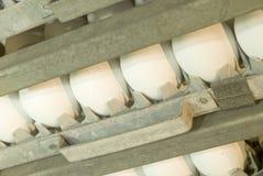 Uova bianche nell'incubatrice Fotografia Stock Libera da Diritti