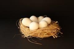 Uova bianche sul nido per deporre le uova Fotografia Stock Libera da Diritti
