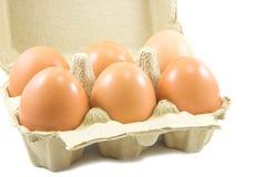 Uova in cartone di carta dell'uovo su fondo bianco immagine stock