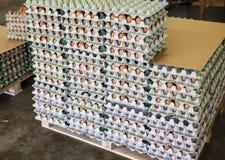 Uova in casella di carta Immagine Stock