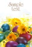 Uova colorate con il tagete Fotografie Stock Libere da Diritti