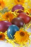 Uova colorate tradizionali Fotografie Stock