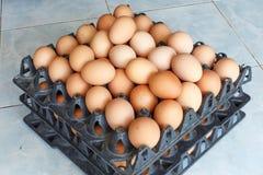 Uova con l'alimento del dettaglio del primo piano del vassoio dell'uovo Immagini Stock