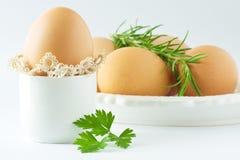 Uova con prezzemolo e rosmarino Immagine Stock Libera da Diritti