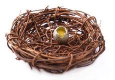 Uova crude del guail Fotografie Stock Libere da Diritti