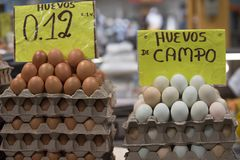 Uova da vendere nell'Ecuador, Sudamerica Immagini Stock Libere da Diritti