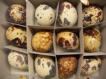12 uova degli uccelli della quaglia in un cartone immagini stock
