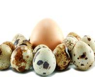 Uova degli uccelli isolate fotografie stock libere da diritti