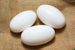 Uova del coccodrillo su tela da imballaggio Immagini Stock Libere da Diritti