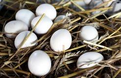 Uova del gallo su fieno Fotografia Stock Libera da Diritti
