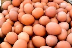 Uova del pollo Immagine Stock
