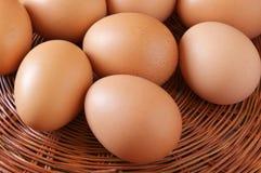 Uova del pollo del Brown Immagini Stock