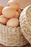 Uova del pollo del Brown Fotografie Stock