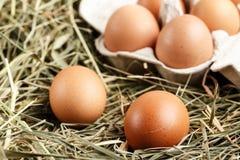 Uova del pollo di Brown Fotografie Stock Libere da Diritti
