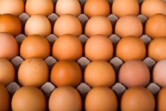 Uova del pollo di Brown Fotografia Stock Libera da Diritti