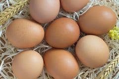 Uova del pollo di Brown nella paglia Immagine Stock Libera da Diritti