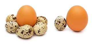 Uova del pollo e della quaglia Immagine Stock