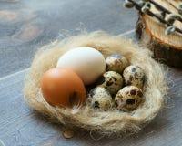 Uova del pollo e della quaglia fotografia stock