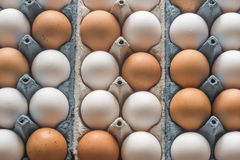 Uova del pollo nel vassoio dell'uovo delle cellule Immagini Stock Libere da Diritti