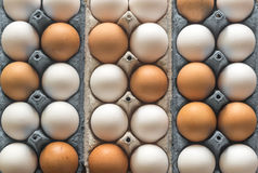 Uova del pollo nel vassoio dell'uovo delle cellule Immagine Stock