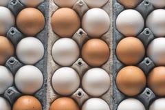 Uova del pollo nel vassoio dell'uovo delle cellule Fotografie Stock