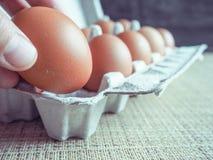 Uova del pollo nell'insieme Immagine Stock Libera da Diritti