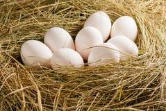 Uova del pollo nella paglia Priorità bassa rustica di legno Immagini Stock