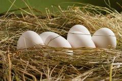 Uova del pollo nella paglia Priorità bassa rustica di legno Fotografia Stock