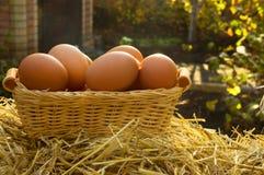 Uova del pollo sul canestro fotografia stock libera da diritti