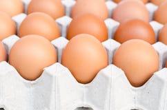 Uova del pollo sul vassoio di carta dell'uovo Fotografia Stock Libera da Diritti