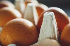 Uova del pollo in vassoio dell'uovo Fotografia Stock Libera da Diritti