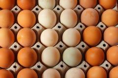 Uova dell'anatra ed uova del pollo Fotografia Stock Libera da Diritti