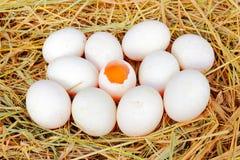 Uova dell'anatra sul nido della paglia Immagini Stock
