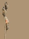 Uova dell'insetto Fotografia Stock