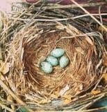 Uova dell'uccello e del nido Immagine Stock Libera da Diritti
