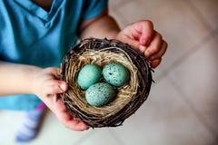 Uova dell'uccello in nido Immagine Stock