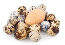 Uova dell'uovo e di quaglie del pollo Immagini Stock Libere da Diritti