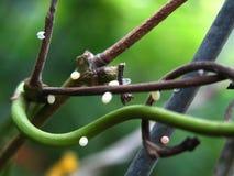 Uova della farfalla fotografia stock libera da diritti