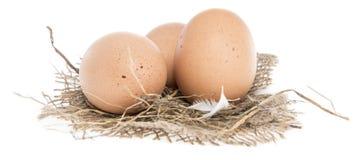 Uova di Brown isolate su bianco Fotografia Stock