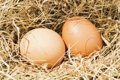 Uova di Brown nel nido del fieno fotografie stock libere da diritti